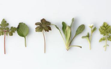 Coronavirus Anxiety: 8 Herbs for the Elderly in Isolation